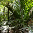 Ferns in tropical jungle — Stock Photo #9405792