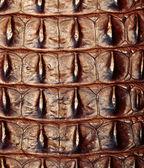 Freshwater crocodile bone skin texture background. — Stock Photo