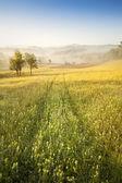 Pole květin a mlha — Stock fotografie