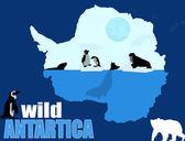 Wild Antartica poster background, — Stock Vector