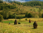 Field with haystack — Stock Photo