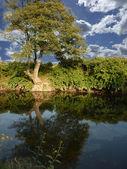 красивый пейзаж — Стоковое фото