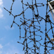 Barbed wire — Stock Photo #10426141
