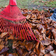 Rake leaves. remove leaves. gardening in the he — Stock Photo