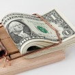 U.s. dollars bills in mouse trap — Stock Photo #10426431