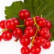 Red currants - red currant — Stock Photo