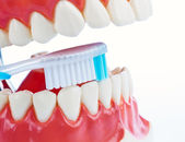 Tooth model with toothbrush when brushing teeth — Stock Photo