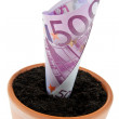 Euro-bill in flower pot. — Stock Photo
