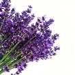 Lavender on a white background — Stok fotoğraf