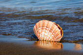 Sea and beach sand with shell — Stock Photo