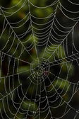 Spider web of a spider — Stock Photo
