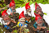 Garden gnomes in a garden — Stock Photo