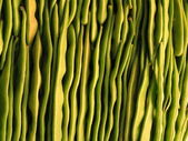 Background of light green beans sorted — Stock fotografie