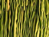 背景光緑色の豆の並べ替え — ストック写真