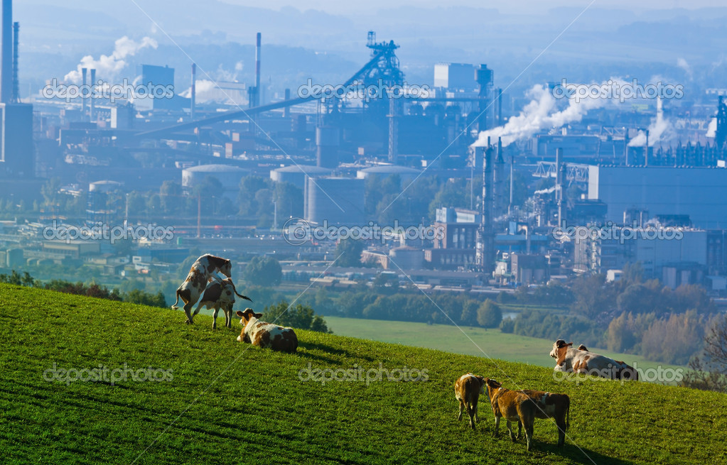 Several cows in a pasture. in the background an industrial site — Stock Photo #8166725