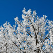 Stock Photo: Landscape with hoar frost, frost and snow