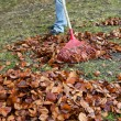 Stock Photo: Raking leaves. remove leaves. gardening in he