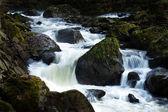 Creek with running water — Stock Photo