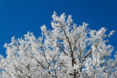 Landscape with hoar frost, frost and snow — Stock Photo