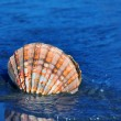 Sea and beach sand with shell — Stockfoto