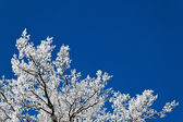 Landscape with hoar frost, frost and snow on tree in winter. — Stock Photo