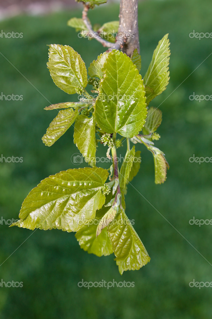 Buds on a tree to drive out in the spring — Stock Photo #8193080