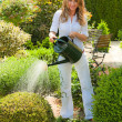 Stock Photo: Woman pouring flowers in the garden with watering can
