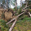 Storm damage. trees in the forest after a storm. - Foto Stock