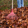Raking leaves. remove leaves. gardening in the fall. — Stock Photo