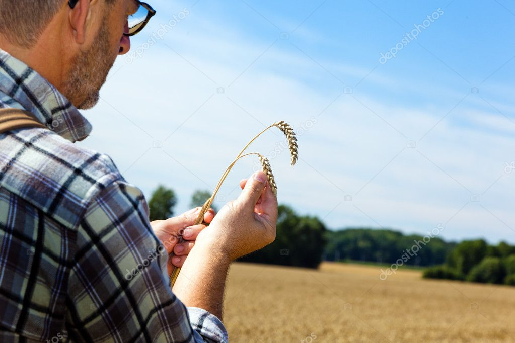 A farmer checks his fields in agriculture. mature wheat field in summer. — Stock Photo #8282886