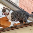 Cat sitting waiting on a rooftop - Stock Photo