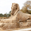 Egypt, memphis, - Stock Photo
