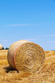 Agriculture. field with straw bales — Stock Photo