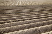 Fresh field in agriculture — Stock Photo