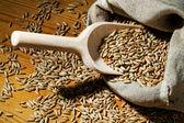 Cereali di segala — Foto Stock