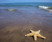 Sea and sand beach with starfish — Stock Photo