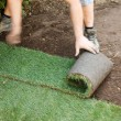 Turf is laid by gardener — 图库照片
