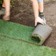 图库照片: Turf is laid by gardener