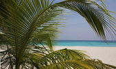 Palm-tree on a dream-beach — Stock Photo