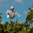 Scarecrow in a vineyard — Stock Photo