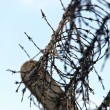Stock Photo: Barbed wire fence at a