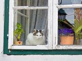 Cat sitting on a window — Stock Photo