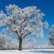 Landscape with hoar frost, frost and snow on tree — Stock Photo #8330455