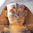 Stock Photo: Egypt, giza, sphinx