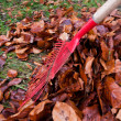 Stock Photo: Raking leaves. remove leaves. gardening in fal