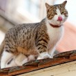 Cat waiting on a rooftop — Stock Photo