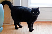 Black cat as a symbol of superstition. — Stock Photo