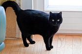 Svart katt som en symbol för vidskepelse. — Stockfoto