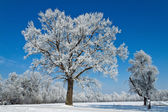 Landscape with hoar frost, frost and snow on tree — Stock Photo