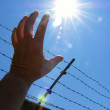 Hand and barbed wire fence against blue sky — Stock Photo